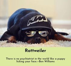 Rottweiler Loving Confident And Loyal Rottweiler Bulldog Breeds Rottweiler Mix