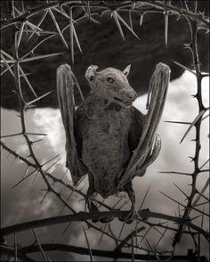 Calcified Bat. © Nick Brandt 2013