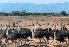 travel town: ... Travel from Cape Town to Oudtshoorn, the world...