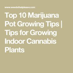 Top 10 Marijuana Pot Growing Tips | Tips for Growing Indoor Cannabis Plants