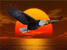 flying eagle at sunset