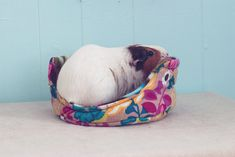 Guinea Pig Cuddle Cup with Absorbent Pad / Guinea Pig Bed / Fleece / Cozy / Size Large / Ultra Absorbent / Rainbow Fields