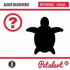 01.12.2017 / Tortue / MerouxTerritoire de Belfort / France