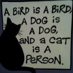 A bird is a bird, a dog is a dog, and a cat is a person.