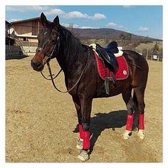 Lerik wearing the little red dress from Kingsland yesterday! Thanks Simmy ... #little #red #dress #kingsland #kingslandequestrian #rideinstyle #equestrianstyle #equestrian #horse #horsebackriding #mannequin #trencin #slovakia