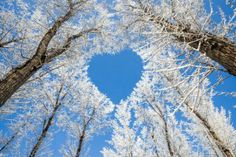 sky, natur heart, heart shapes, winter heart, beauti, tree branches, winter weddings, mother nature, blues