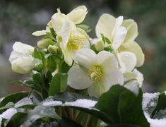 Mit ültessünk árnyékos helyre a kertben? - Növények árnyékos, száraz helyre