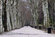 Cerrado al público un sector del parque del Retiro de Madrid por el fuerte viento | 20minutos.es