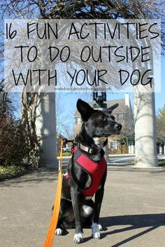 16 Fun Activities to Do Outside with Your Dog