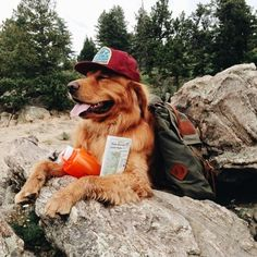 My brother's red-necked dawg, Larry, likes to go camping. He enjoys setting up tents, campfires, fishing, and pooping in the woods. ~~ Houston Foodlovers Book Club
