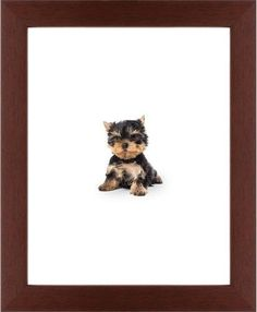 Terrier Puppy Framed Print, Brown, Contemporary, White, White, Single piece, 11 x 14 inches
