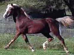 Courage of Quietude...Lambert Stallion.