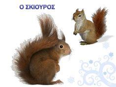 Πληροφορίες κι Εποπτικό Υλικό: Ζώα σε Χειμερία Νάρκη