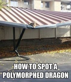 Aaaah! A dragon disguised as a cat!