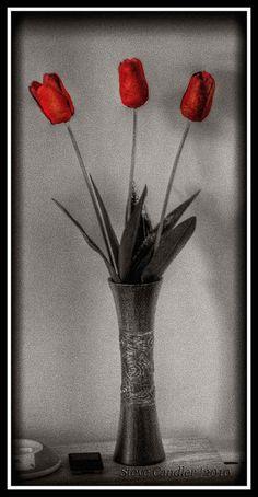Art-e-ficial by Light+Shade [spcandler.zenfolio.com], via Flickr