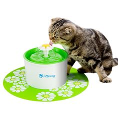 Cat Fountain isYoung Pet Fountain Automatic Pet Water Dispenser, Pet Health Caring Fountain for Cat and Small Dog/Animals * Want additional info? Click on the image. (This is an affiliate link) #CatLovers