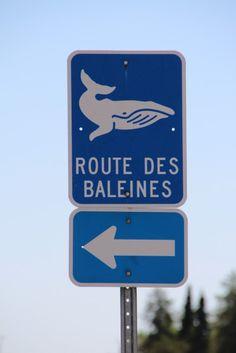 En attendant que les baleines, les belugas, les rorquals et autres phoques pointent leurs museaux, quelques vues depuis les rochers au bord ...