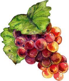 dibujos coloreados racimos de uvas Coffee Area, Wine Vineyards, Watercolor Fruit, Soul Art, Seed Packets, Fruit Art, Wine Bottle Crafts, Chalkboard Art, Kitchen Art