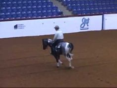 Forest Midnight Comet - APHA Blue Roan Tobiano Stallion - YouTube