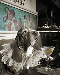 Stir Your Soul | Marie Laveau's Voodoo Bar on Decatur Street | Swamp Dog and Friends Gallery