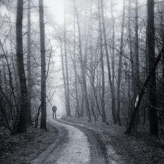 Haunted forest by michal_koralewski