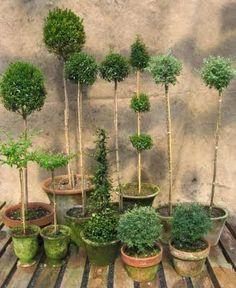 Topiary joy