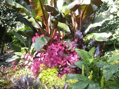 A blog about gardening, plants, horticulture, wildlife, animals, and the environment
