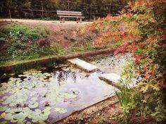 Şehrin ortasında doğaya açılan kapı. #botanical #botanicalgardens #botanik #botanikpark #ataşehir #istanbuldayasam #belgeseladam #istanbul