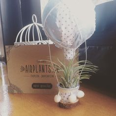 Say hello to my little AirPlant! Thanks @efzincreations & @airplantsgr #airplants #craftparty  #bloggers #plants