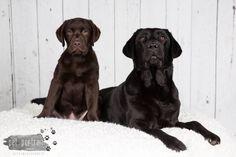 Pet Portrait Dierenfotografie - Paasactie-4