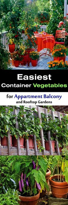 4305 Best Container Gardening Images Container Gardening Plants