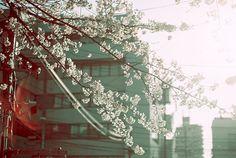 42/366 ++ photographer : aki