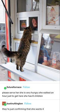 Animal Jokes, Funny Animal Memes, Stupid Funny Memes, Cat Memes, Cute Little Animals, Cute Funny Animals, Funny Cute, Cute Cats, Hilarious