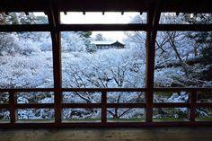 京都日和 〜 Kyoto Biyori ~ : 音が消えた東福寺♪ (27.2.1朝撮影)