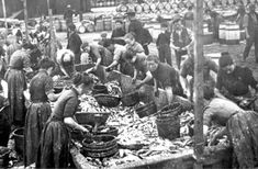 "Gutting crews at work at a Peterhead curing yard. The herring were carted from the quayside and salted as they were poured into the ""farlane,"" the big wooden trough where the gutting teams worked. They worked at great speed, some skilled gutters could clean as many as 60 herring in a minute, gutting the herring with razor sharp knives and packing them into barrels. The men and boys in the picture are coopers and their apprentices."
