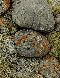 Elliot Porter. 1972. Lichens on River Stones, Iceland (Getty Museum)