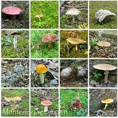 Montessori Mushroom Preschool Lesson - Child Led Life