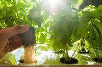 Växthus av gamla fönster Herbs, Backyard, Garden, Plants, Outdoor, Inspiration, Tips, Summer, House
