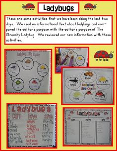 Ladybug Chameleon Wallpapers) – Wallpapers and Backgrounds Kindergarten Science, Science Classroom, Teach Preschool, Kindergarten Reading, Teaching Skills, Teaching Ideas, Learning Stories, Authors Purpose, Creative Curriculum