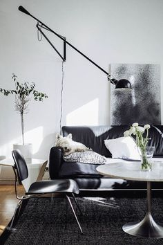 Pets in interiors (French By Design)