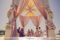 So chic! Pastel pink and cream. Baby pink and white roses. Pillars. Fabric. Outdoors wedding mandap/canopy