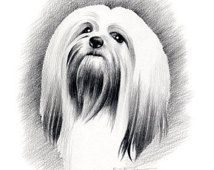 LHASA APSO Art Print Signed by Artist DJ Rogers