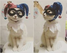 Classic Harley Quinn Cat