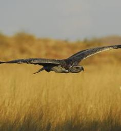 Africa Exclusive - 404 not found South Africa Safari, African Safari, Homeland, Kenya, Martial, Eagle, Animals, Animales, Animaux