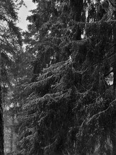 Photographer Satu Ylavaara´s CV: Suomalainen metsä Lappland, Rocky Horror, The Clash, Swansea, 50 Shades, Black And White Photography, Snow, Artwork, Outdoor