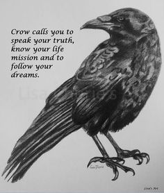 Crow calls you to speak your truth, know your life mission and to your dreams. Crow Spirit Animal, Animal Spirit Guides, Magick, Witchcraft, Wiccan, Pagan, Crow Totem, Crow Bird, Crow Call