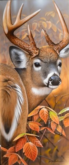 Deer in the Fall. #fall #autumn #deer