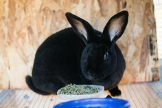 """""""The Basics of Raising Homestead Rabbits"""" Thinking about getting into meat rabbits? Here are a few basics about raising, breeding and processing that may help you along the way. From MOTHER EARTH NEWS"""