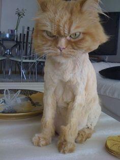 Not Happy.