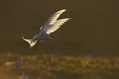 Master Backlighting in Wildlife Photography | Nature TTL